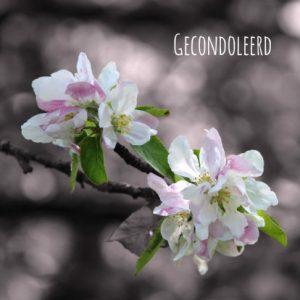 condoleancekaart-bloem-sfeervol